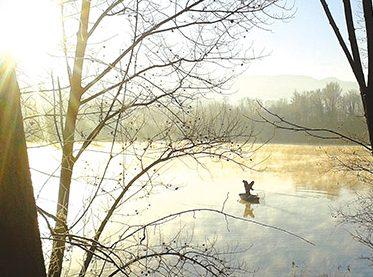 moose-4-image-2